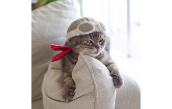 Erre is jó a kihullott macskaszőr